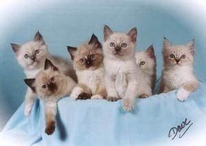 The Boardroom Kittens - adj w viveza